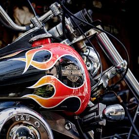 Harley by Lenny Sharp - Transportation Motorcycles ( harley, flames, hog, biker )