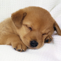 Cute dog Puppy Wallpaper HD icon