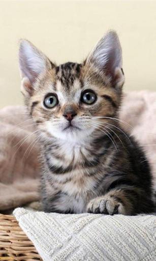 Niedliche Kätzchen Wall