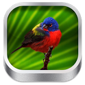 3D Bird Songs icon