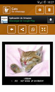 玩免費通訊APP|下載Cats app不用錢|硬是要APP