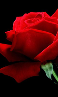 紅色的花朵壁紙
