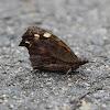 Beak Butterfly
