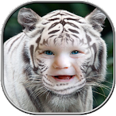 Tiger Photo Frames