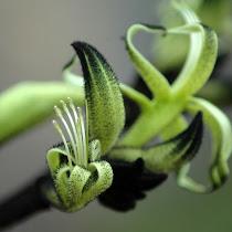 Flowers of Oceania