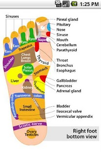 Foot Reflexology chart|玩健康App免費|玩APPs