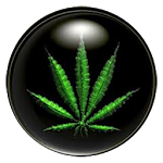 What Is Marijuana - Weed Facts