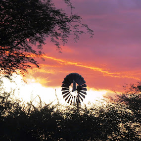 Namibian sunset 29/12/2013 by Kleintjie Loots - Landscapes Sunsets & Sunrises ( clouds, technology, bushes, trees )
