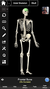 Essential Skeleton 3- screenshot thumbnail
