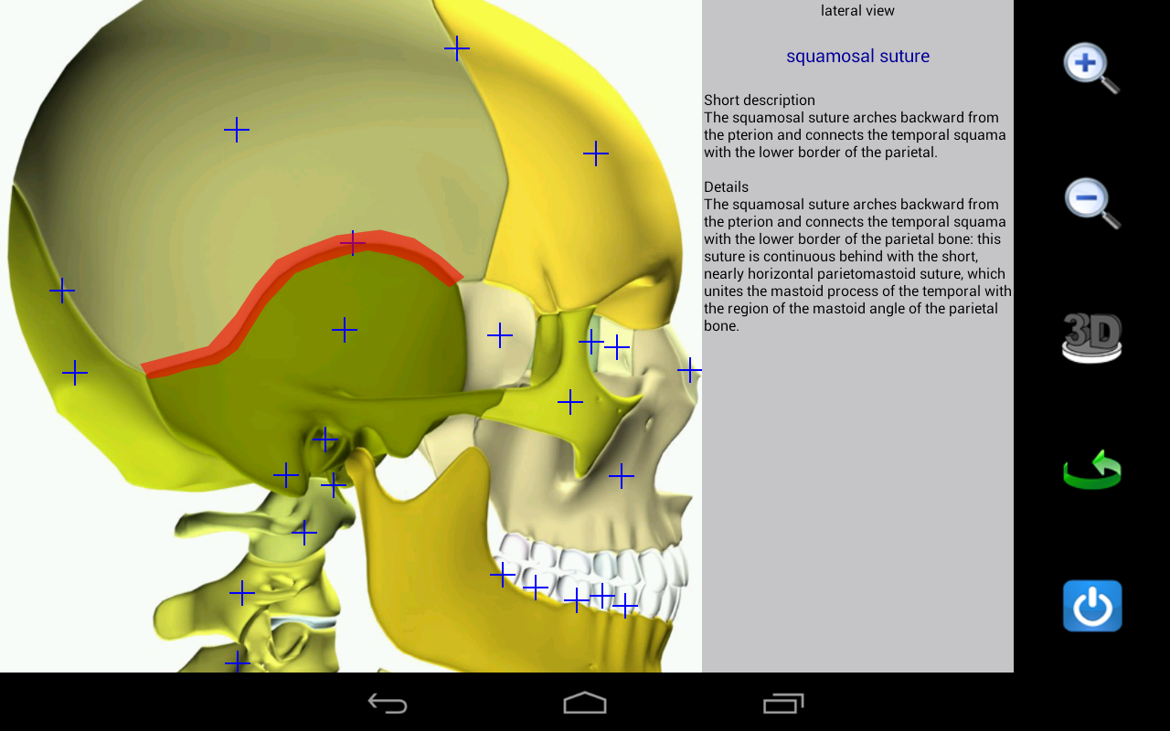 Visual Anatomy- screenshot