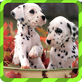 Puppy Games - Spot Differences