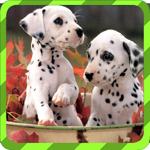 Puppy Games – Spot Differences for PC and MAC