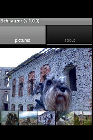 Schnauzer - screenshot