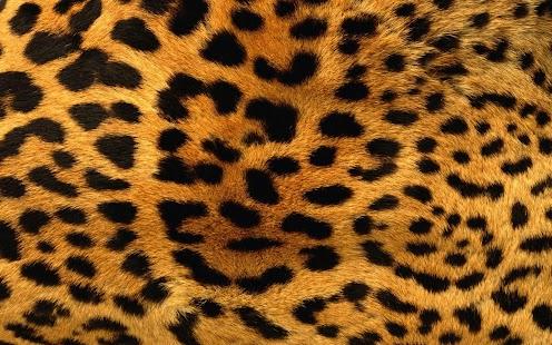 【免費個人化App】豹紋壁紙-APP點子