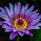 beautifullily2.jpg