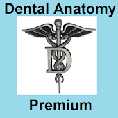Dental Anatomy Premium