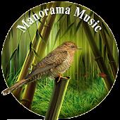 Bamboo Symphony Lite