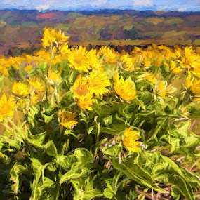 Balsam Root by Glenn Miller - Painting All Painting ( spring flowers, oregon, columbia gorge, sunflower, balsam root )