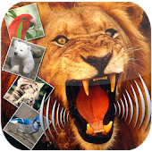 Animal sound - Zoological Park