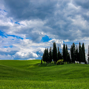 Tuscany  by Sabina Kos - Landscapes Prairies, Meadows & Fields ( , renewal, green, trees, forests, nature, natural, scenic, relaxing, meditation, the mood factory, mood, emotions, jade, revive, inspirational, earthly, relax, tranquil, tranquility )