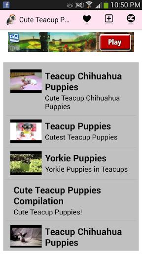Cute Teacup Puppies