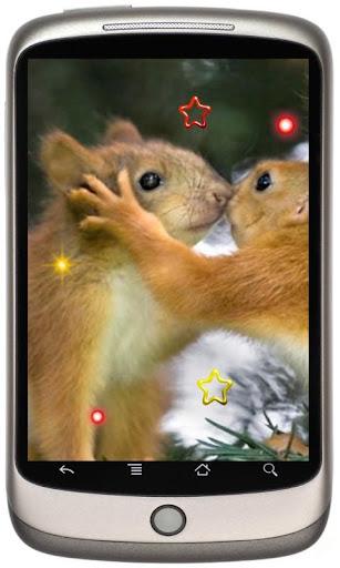 Squirrel Dance live wallpaper