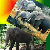 Elephant Find Difference Game