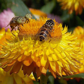 by Bhaskar Patra - Flowers Single Flower (  )