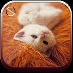 Cute Cat - Start Theme
