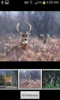 Screenshot of HD Deer Wallpapers