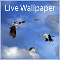 Birds Free Live Wallpaper icon
