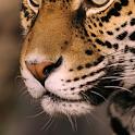 Animal Noses 1 FREE icon