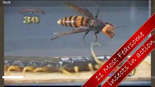 玩媒體與影片App|Insect At War免費|APP試玩