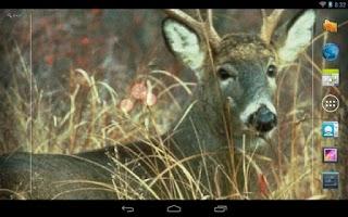 Screenshot of Deer Hunting Live Wallpaper