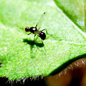 Ant with wings