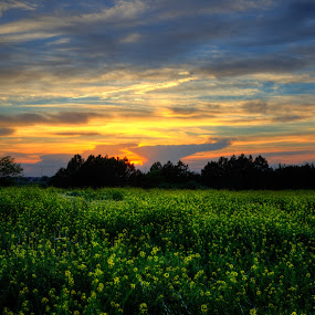 flowers and fire by Chris Clay - Landscapes Sunsets & Sunrises ( omaha, hdr, sunset, flowers, nebraska )