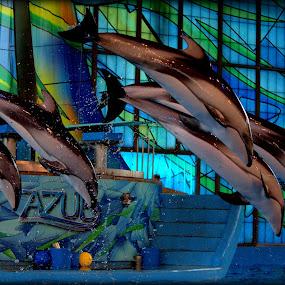 Beluga Whales by Sraddheshnu Basu - Animals Other Mammals
