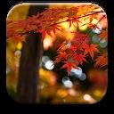 Autumn Wallpaper APK