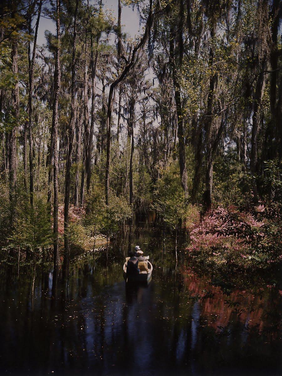 Cypress Gardens Near Charleston S.C. - Hansel Mieth — Google Arts ...