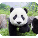 Cute Panda Photography logo