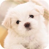 Pet Dog Wallpaper