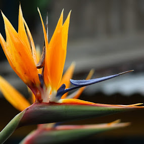 Bird of paradise  by Debapriya Bhattacharya - Flowers Flowers in the Wild