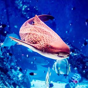 by Brad Uhlmann - Animals Sea Creatures ( sea creatures, underwater life, ocean life )