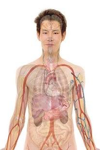 解剖阿特拉斯免費。