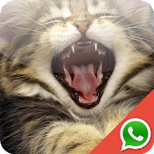Kitten Wallpapers for WhatsApp