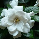 Magnolia Plantation & Gardens icon
