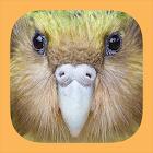 Birds of New Zealand icon