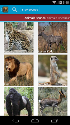 Safari Animal Sounds and List - screenshot