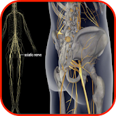 Sciatic Nerve Treatment