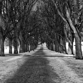 A walk in the park by Tom Mehlum - City,  Street & Park  City Parks ( winter, park, trees, city park, city )